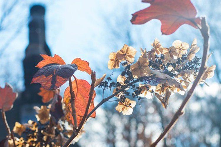 Winter-Leaves_Jan-2015-LP