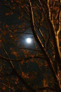 Full Moon in NJ